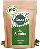 Sencha Grüntee Bio 250g - Spitzenpreis - Vorratspackung für 100 Tassen - Mild, leicht grasig, dabei feinherb und blumig - Fairbiotea-Zertifikat - DE-ÖKO-005